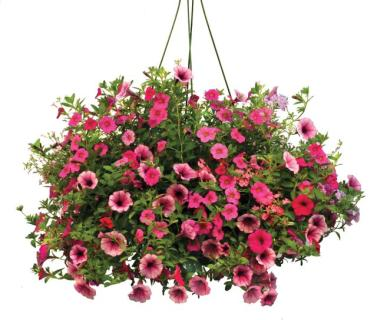 Outdoor hanging baskets